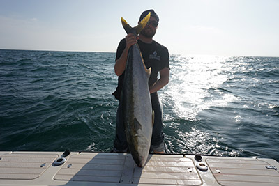 Yellowtail Fever Continues Fishing Local Waters